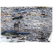 Namibian Leopard Poster