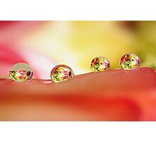 Four in a row Photographic Print