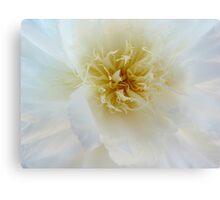 Peony Macro flower photography Canvas Print