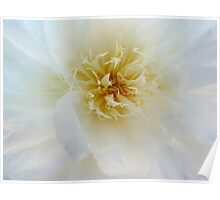 Peony Macro flower photography Poster