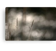 """"""" Grass Patterns In The Sunlight """" Canvas Print"""