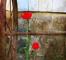 Red Tulips and Rusty Wheel by jemvistaprint