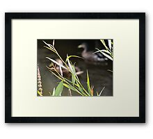 Behind The Reeds by Elisabeth and Barry King™ Framed Print
