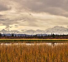 Denali Above the Reeds by Michael Atkins