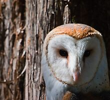 Barn Owl by Lisa G. Putman