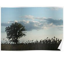 single tree in field Poster
