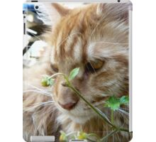 Sir Richard the Cat iPad Case/Skin