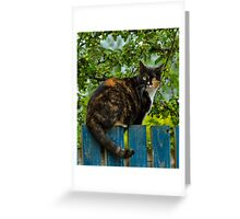 MIKA - THE TOMBOY CAT Greeting Card