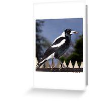 Australian Magpie. Greeting Card