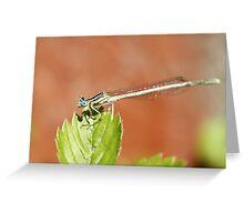 Blue eyes dragonfly Greeting Card