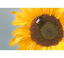The Sunflower and the Bee Photographic Print