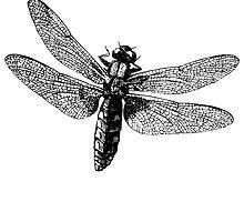 Dragonfly by kwg2200