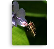Hoverfly (3) Canvas Print