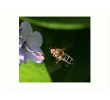 Hoverfly approaching flower Art Print