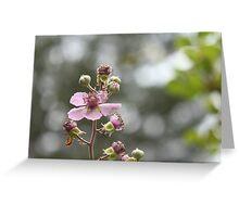 Rubus blackberry Greeting Card