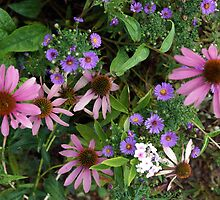 Lovely Garden by Loisb