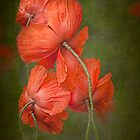 Poppy Family by Beth Mason