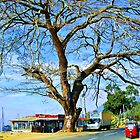 Lovely as a tree  (please see description) by Kanages Ramesh
