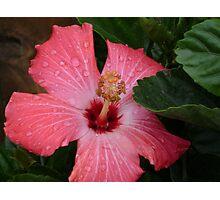 Flower Beauty - 16 Photographic Print