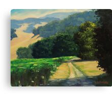 Along The Vineyard Canvas Print