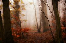 Autumn Woodland by Tim Waters