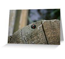 Kidney Spot Ladybird Greeting Card