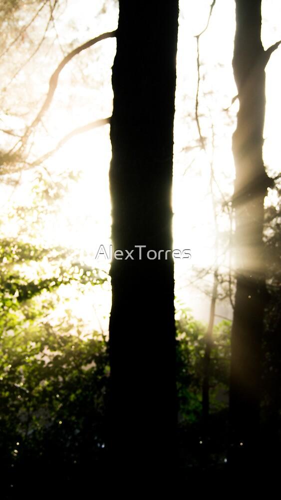 Halo Tree by AlexTorres