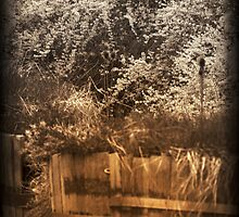 Sepia Barrels rustic black and white and sepia tones by jemvistaprint