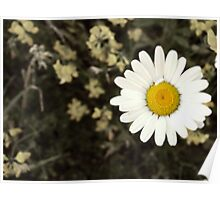 The Daisy flower art photography macro nursery decor Poster