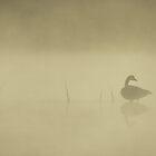 Magical Morning Fog by debraroffo