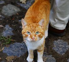 Old Farm's Cat by Gilberte