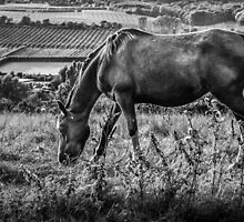 Out to grass by Ian Hufton