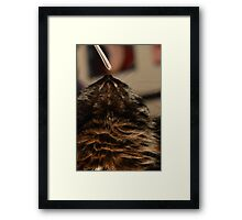 Niko - Maine Coon Framed Print