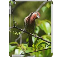 House Finch (iPad Case) iPad Case/Skin