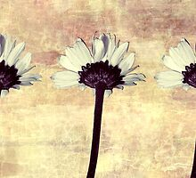 Three Little Daisies by MSRowe Art and Design