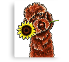 Sunny Chocolate Labradoodle Canvas Print