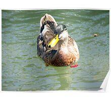 duck 120 Poster