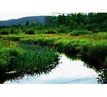 Side of the Road Swamp Photographic Print
