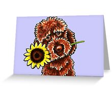 Oh Sunny Day Chocolate Labradoodle  Greeting Card