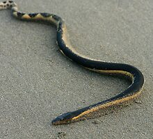 Sea Snake on a Beach by rhamm