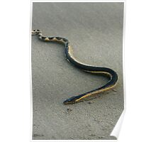 Sea Snake on a Beach Poster