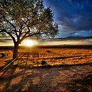 New Mexico Sunset by njordphoto