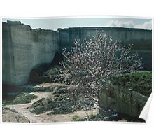 Cherry blossom in stone block quarry just out of Matera 19840331 0027  Poster