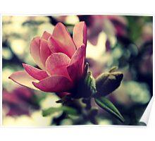 Magnolia Delicate Bloom Poster