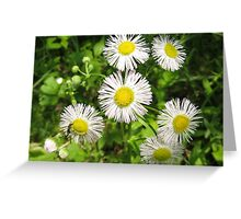 English Daisies Greeting Card