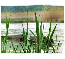 Wetland Grass 2 Poster