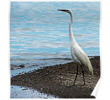 Heron By The Beach Poster
