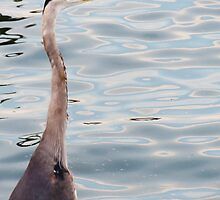 Grey Heron By The Bay by MSRowe Art and Design