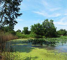 East Harbor State Park - Algae Bloom by SRowe Art