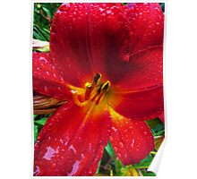 Daylily in The Rain - Fiery Red Poster